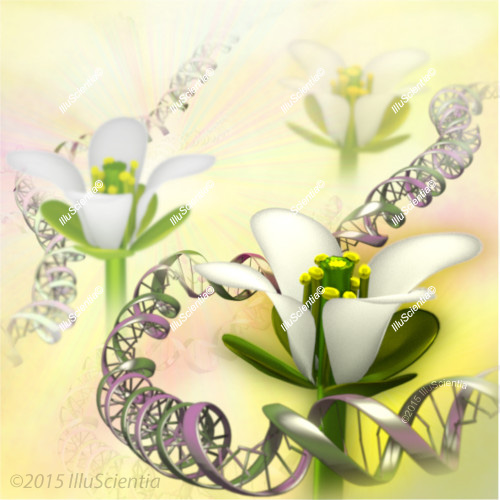 Genetic Research in plant model Arabidopsis thaliana