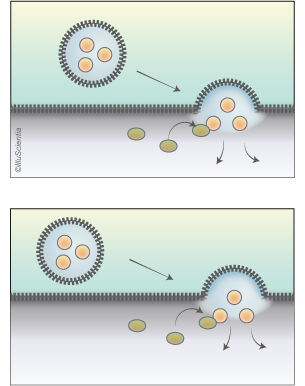Composition - vesicular trafficking in cells - scientific illustration